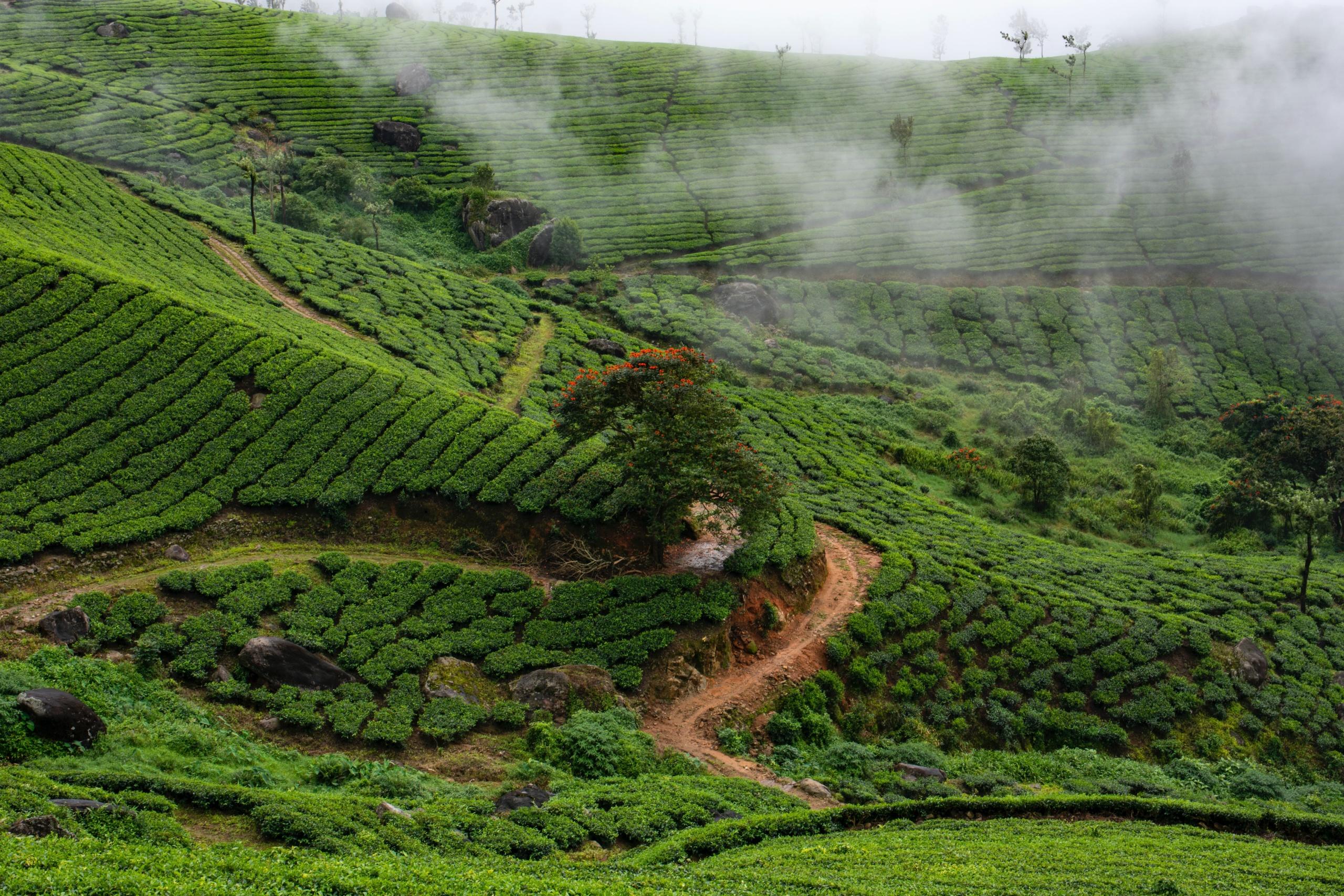 Kerala El paraíso verde