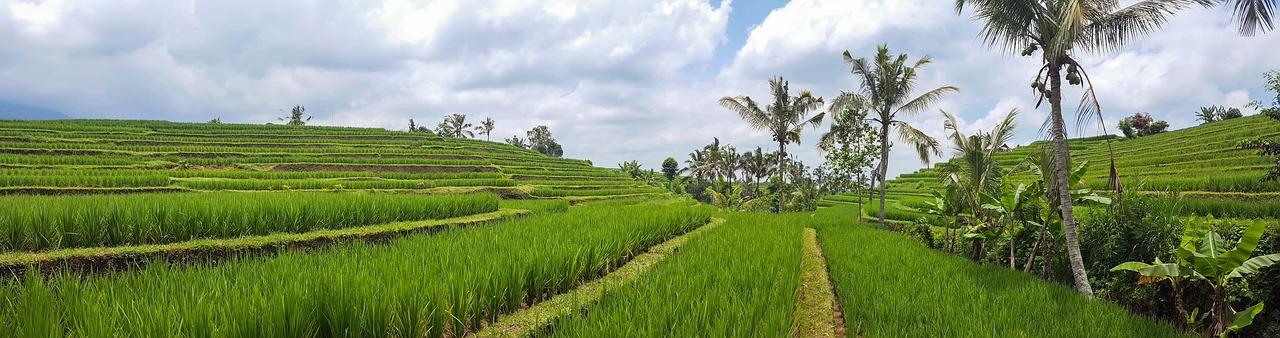 Bali, naturaleza salvaje RAW TRAVEL