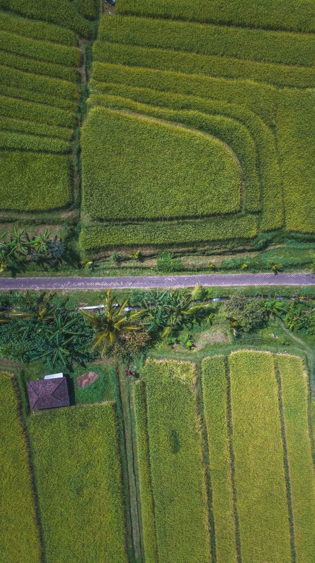Bali naturaleza salvaje RAW Travel